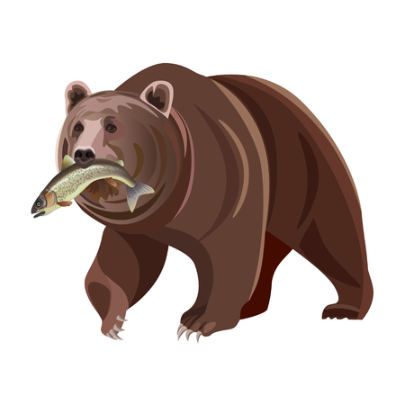Grizzly bear with fish in mouth. Vector illustration isolated on white background
