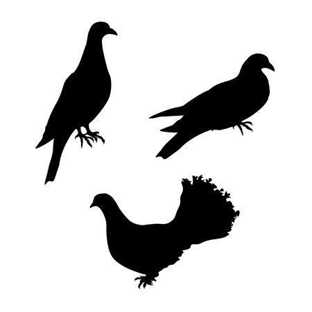 Set of pigeons. Vector black silhouettes on white background