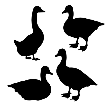 Set of goose black silhouettes on white background