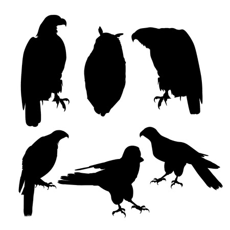 Birds of prey. Set of vector black silhouettes on white background