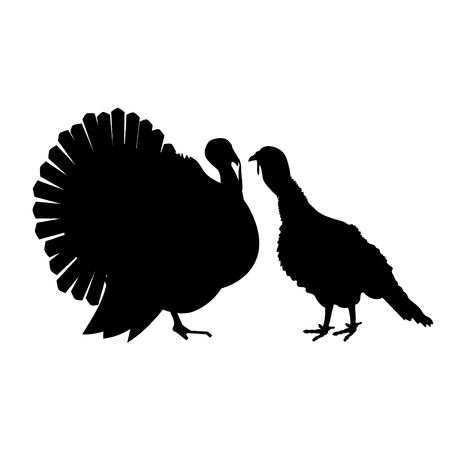 Turkey pair, tom and hen, male and female. Vector black silhouettes on white background