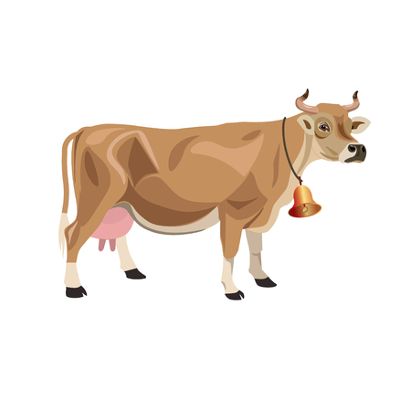 Krowa Jersey na białym tle. Ilustracja wektorowa na białym tle Ilustracje wektorowe