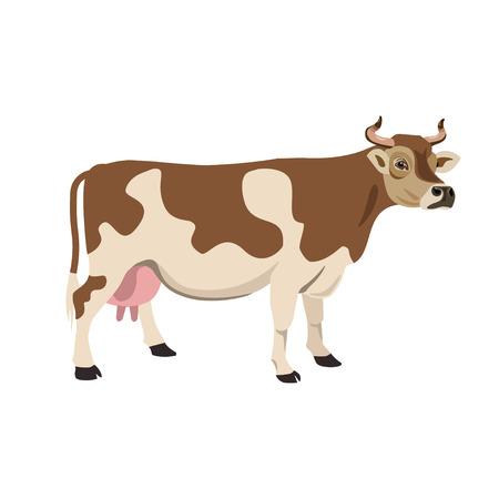 Brown und Weiß beschmutzte Kuh. Vektorabbildung, getrennt auf weißem Hintergrund.