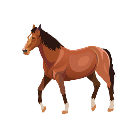 Brown walking horse. Vector illustration on white background