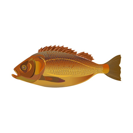Whole fried fish. Side view. Vector illustration isolated on white background