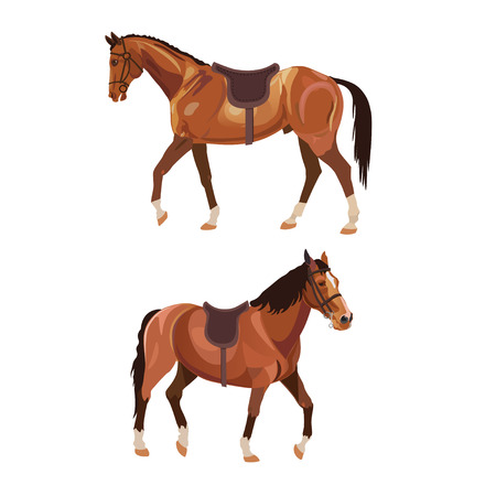 Two saddled horses, side view and semi-front. Vector illustration isolated on white background Illustration