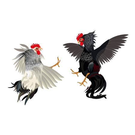 Two roosters fighting vector illustration isolated on a white background Vetores