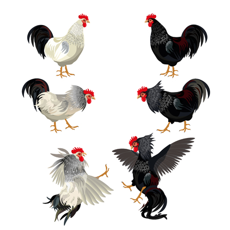 Rooster icon set 矢量图像