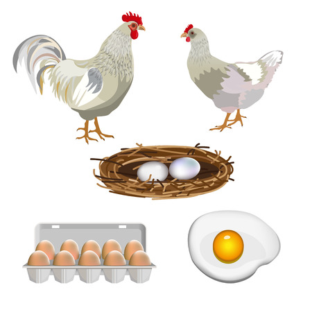 Farm set with rooster, hen and eggs. Vector illustration, isolated on black background. Çizim