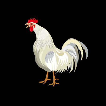 White rooster crowing. Vector illustration isolated on black background.
