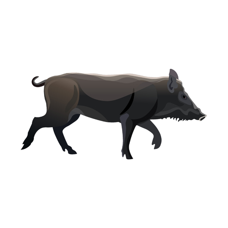 Running wild boar. Vector illustration isolated on white background.