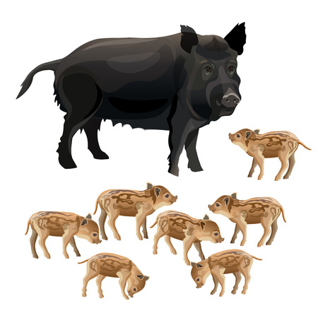 Wild boar sow with piglets. Vector illustration isolated on white background.