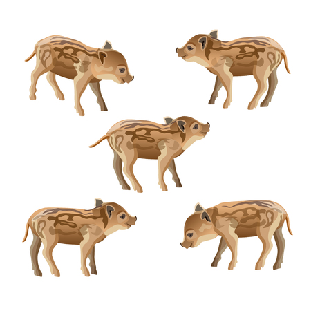 Wild boar piglet set. Vector illustration isolated on white background.  イラスト・ベクター素材