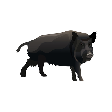 Single wild boar. Vector illustration isolated on white background.
