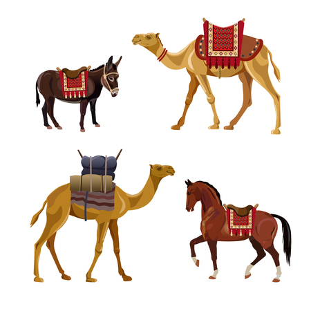 Set of vector pack animals - camel, horse and donkey. Illustration isolated on white background Illustration