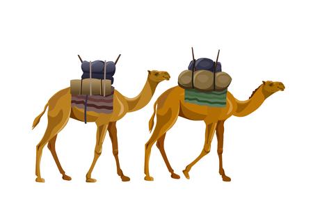 Due cammelli che camminano con il carico. Illustrazione vettoriale isolato su sfondo bianco Vettoriali