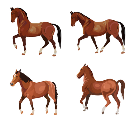 Horses in various poses . Set of vector illustration isolated on white background.