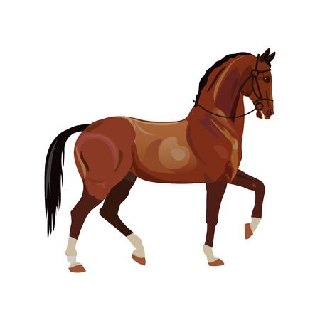 cheval se dresse avec un coup de poing avant souriant illustration isolé sur fond blanc