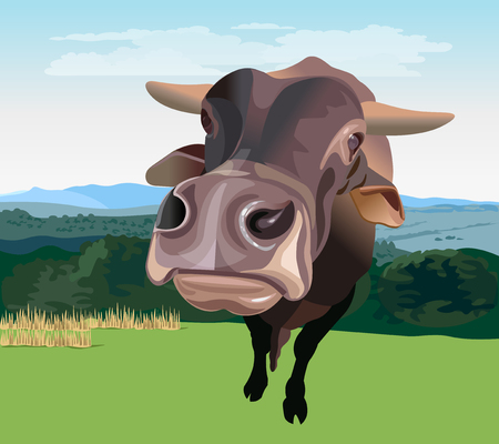 Wide angle view of a brown cattle. Vector illustration isolated on white background. Vectores