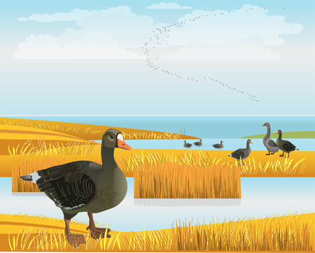 Waterscape with wild geese. Vector illustration