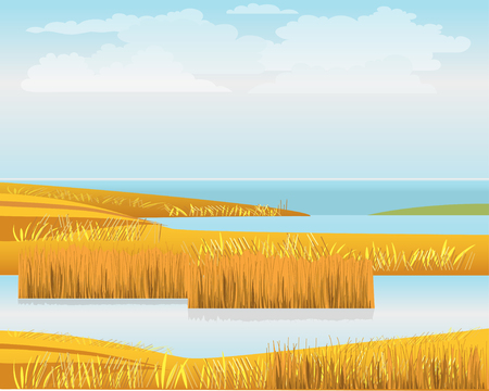 Beautiful landscape with bulrush and lakes on the seashore. Vector illustration Ilustração