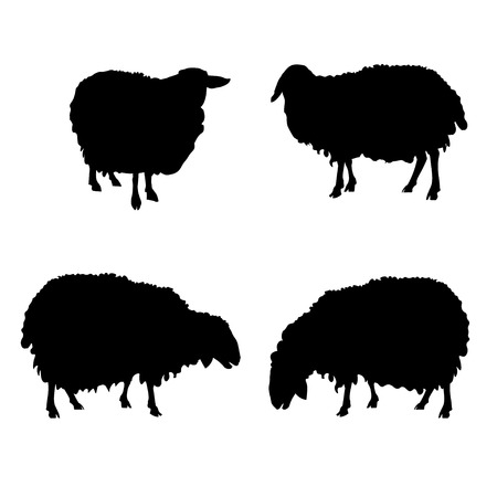 Set of vector silhouettes of sheep. Illustration isolated on white background