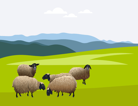 Herd of sheep on green pasture. Vector illustration