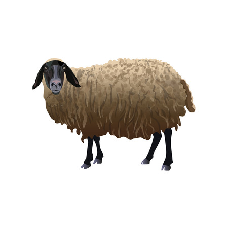 Sheep with black head. Vector illustration isolated on white background
