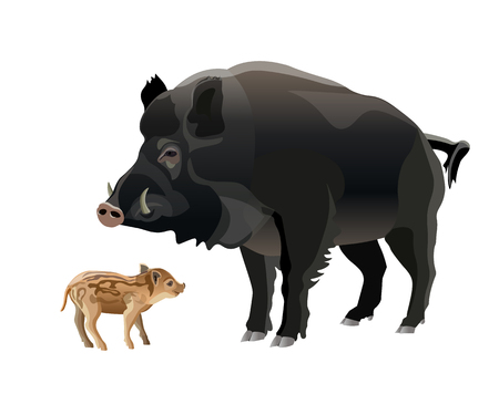 Wild boar with piglets. Vector illustration isolated on white background
