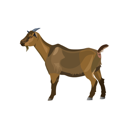 Brown goat standing side view. Vector illustration isolated on white background