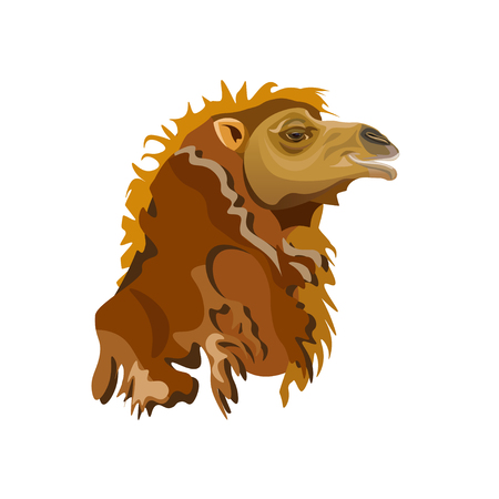 Head of a bactrian camel close-up, side view. Vector illustration isolated on white background