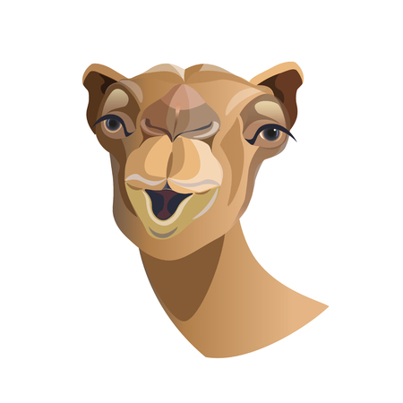 Head of a camel close-up, front view. Vector illustration isolated on white background