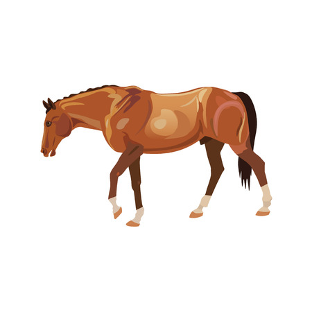 Wandering horse red. Vector illustration isolated on white background Illustration