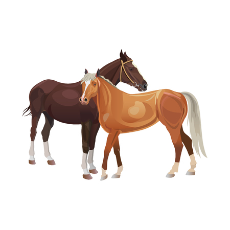 Two horses standing together . Vector illustration isolated on white background