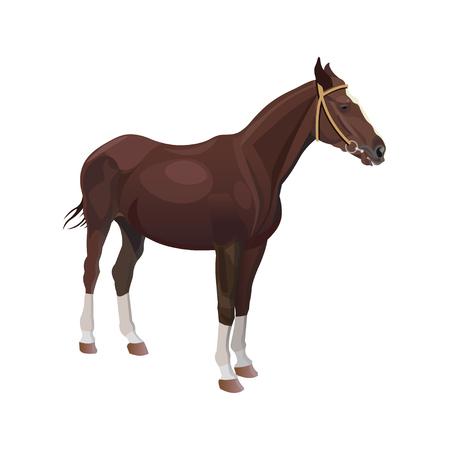 Bay horse. Vector illustration isolated on white background Illustration