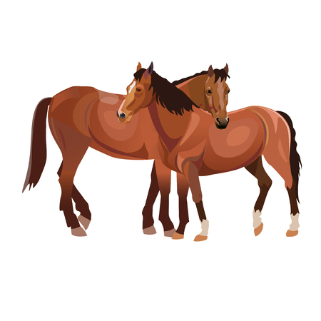 Two horses grooming each other. Vector illustration isolated on white background
