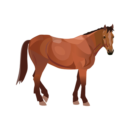 Bay thoroughbred horse. Vector illustration isolated on white background