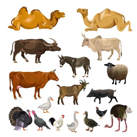 Conjunto de animales de granja. Ilustración de vector aislado sobre fondo blanco.