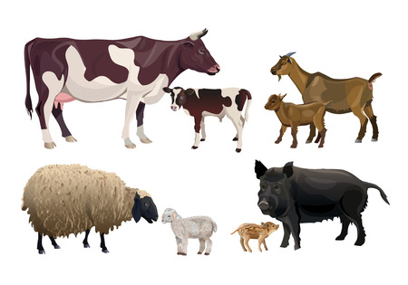 Farm animals and their kids. Cow, goat, sheep and pig. Vector illustration isolated on white background