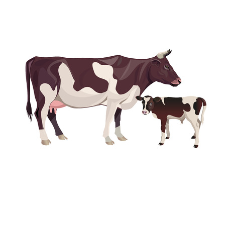 Cow mother with baby calf. Vector illustration isolated on white background Vectores