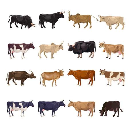 Zestaw do hodowli bydła. Krowy i byki. Widok z boku. Ilustracja wektorowa na białym tle Ilustracje wektorowe