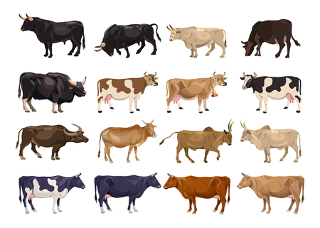 Cattle breeding set. Cows and bulls. Side view. Vector illustration isolated on white background Иллюстрация