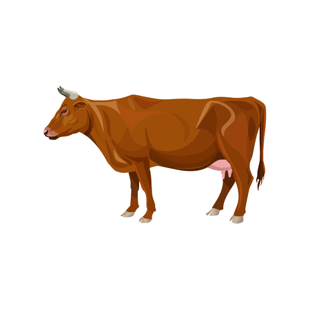 Brown cow standing. Side view. Vector illustration isolated on white background