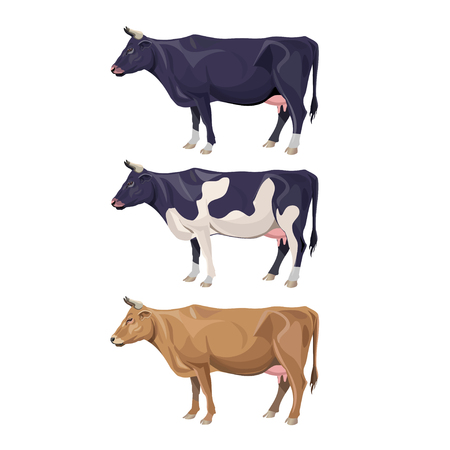 Different cows colors set