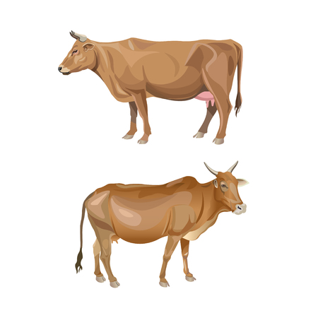 Two red cows. Side view. Vector illustration isolated on white background 向量圖像