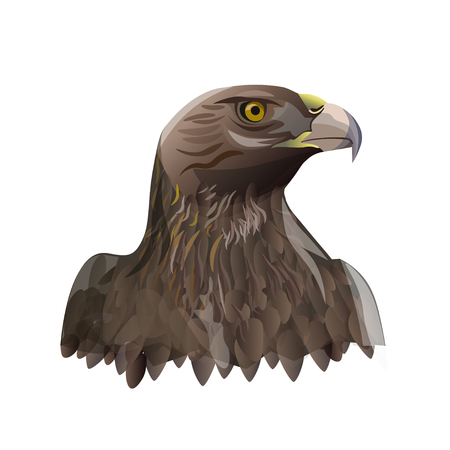 Head portrait of golden eagle. Vector illustration isolated on the white background