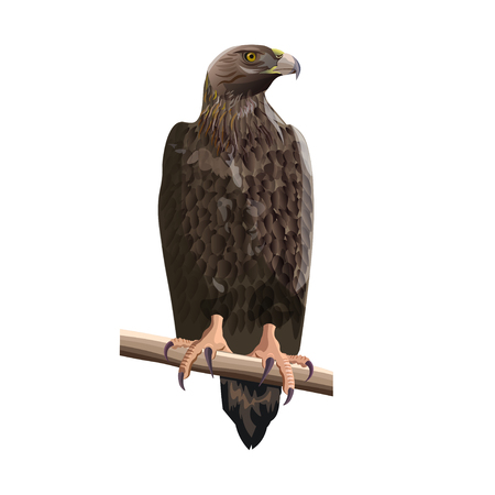 Golden eagle sitting on a tree branch. Vector illustration isolated on the white background