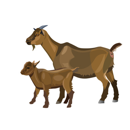 Mother goat and her kid. Vector illustration isolated on white background