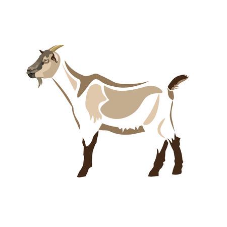 Stylized figure of a goat. Animal design. Vector illustration isolated on white background Illustration