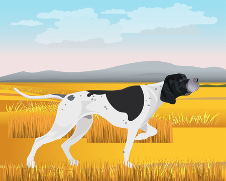 Adult black and white English pointer working in the field. Vector illustration